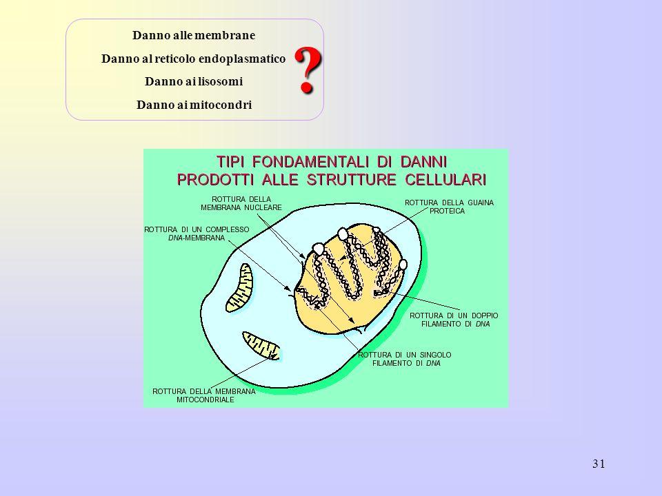 31 Danno alle membrane Danno al reticolo endoplasmatico Danno ai lisosomi Danno ai mitocondri ?