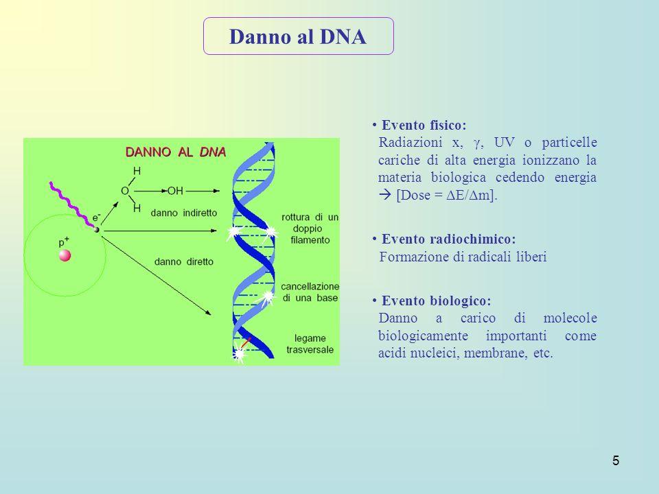 5 Evento fisico: Radiazioni x, γ, UV o particelle cariche di alta energia ionizzano la materia biologica cedendo energia [Dose = ΔE/Δm]. Evento radioc