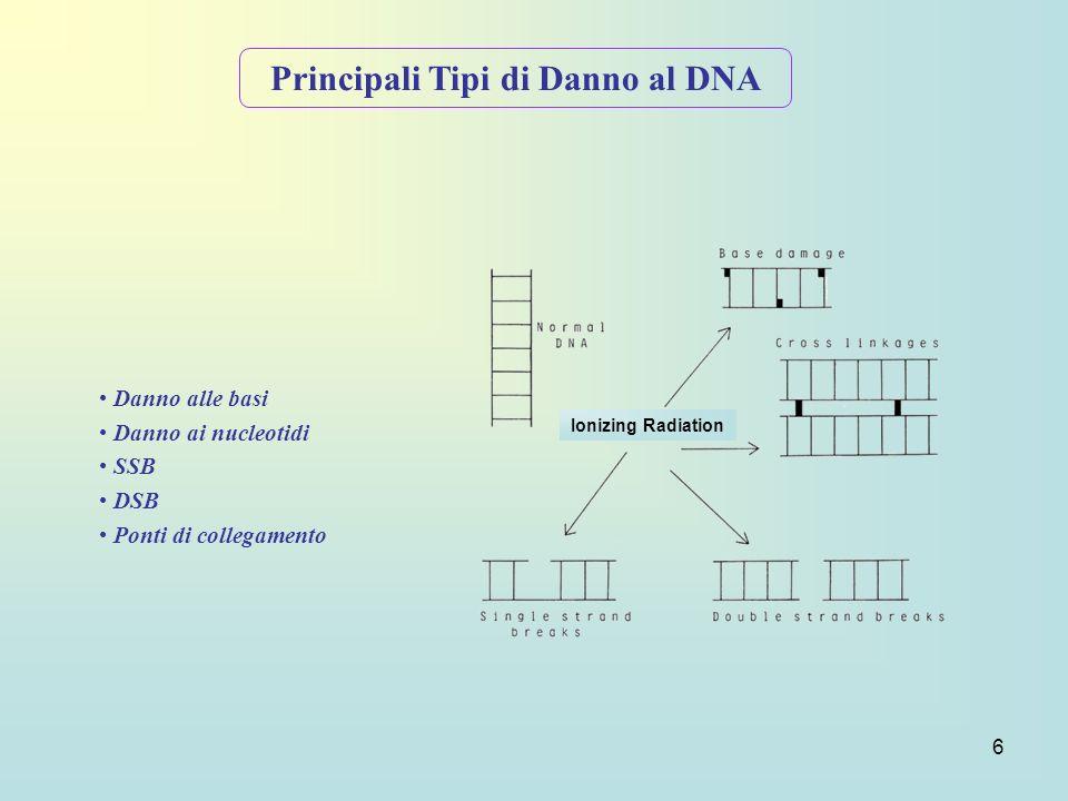 6 Principali Tipi di Danno al DNA Danno alle basi Danno ai nucleotidi SSB DSB Ponti di collegamento Ionizing Radiation
