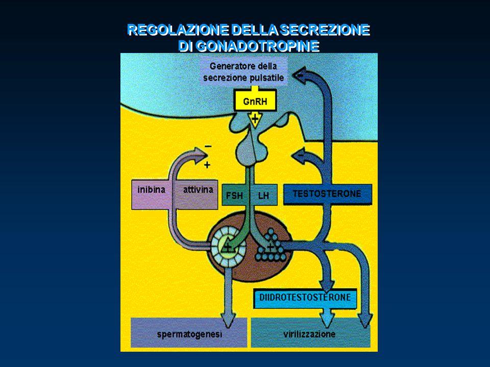 REGOLAZIONE DELLA SECREZIONE DI GONADOTROPINE REGOLAZIONE DELLA SECREZIONE DI GONADOTROPINE
