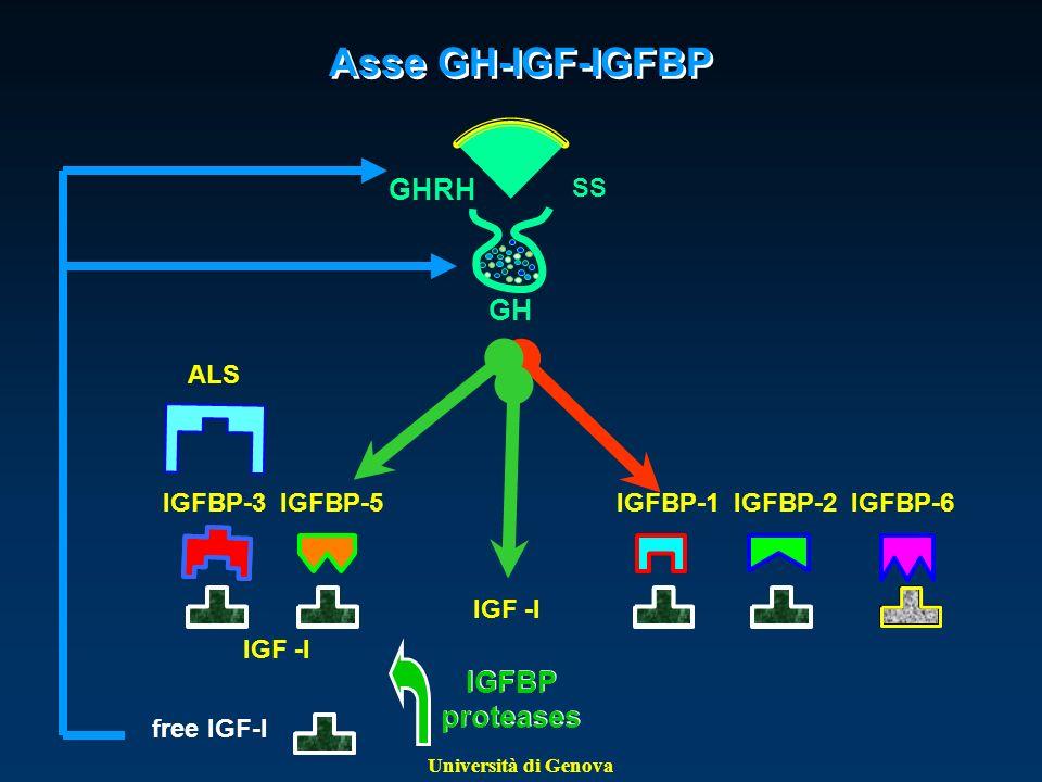 Università di Genova Asse GH-IGF-IGFBP GHRH SS GH IGFBP-3 IGFBP-5 IGFBP proteases ALS IGFBP-1 IGFBP-2 IGFBP-6 free IGF-I IGF -I