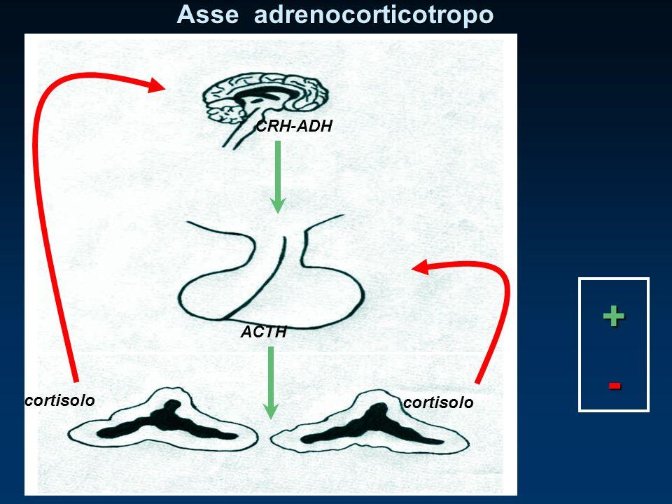 CRH-ADH ACTH cortisolo Asse adrenocorticotropo + -