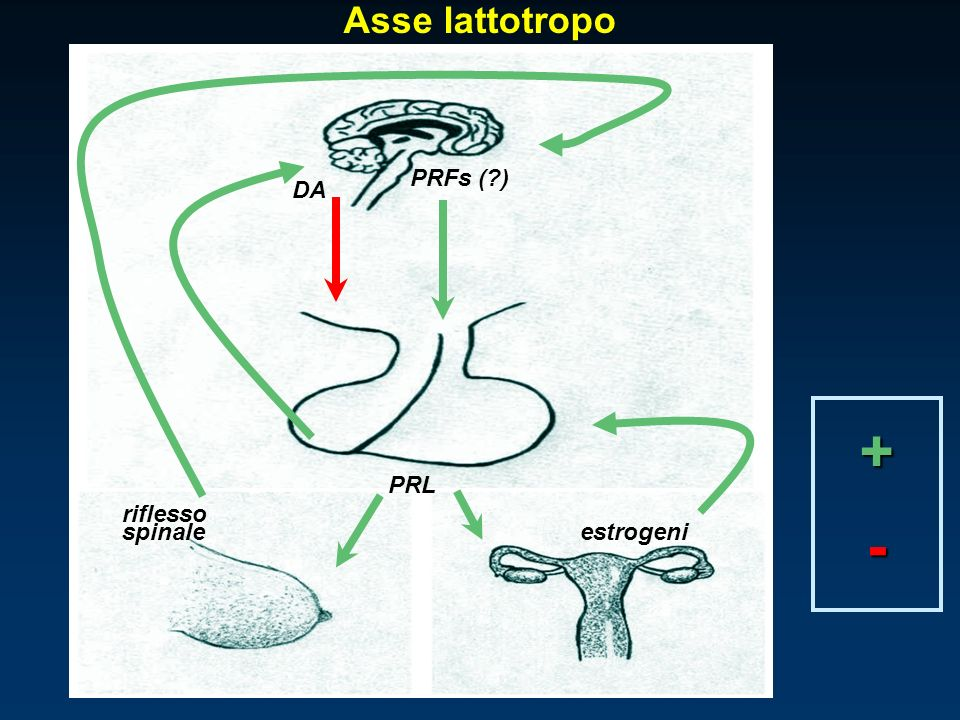 Asse lattotropo riflesso estrogeni PRFs (?) PRL DA spinale + -