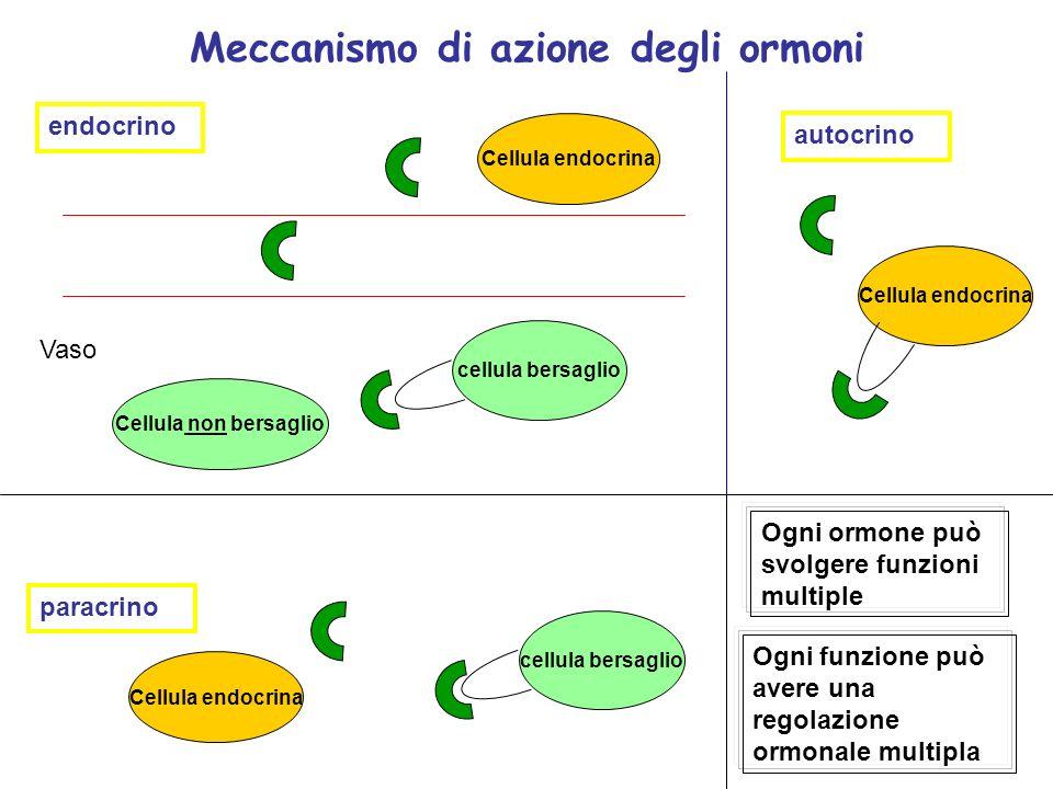 Meccanismo di azione degli ormoni Cellula endocrina Vaso endocrino Cellula endocrina paracrino cellula bersaglio autocrino cellula bersaglio Cellula n