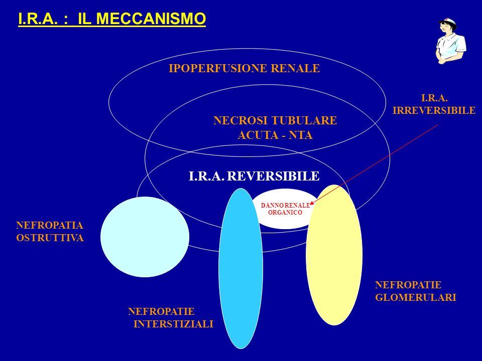 DANNO RENALE ORGANICO IPOPERFUSIONE RENALE NECROSI TUBULARE ACUTA - NTA I.R.A. REVERSIBILE NEFROPATIE GLOMERULARI NEFROPATIE INTERSTIZIALI NEFROPATIA