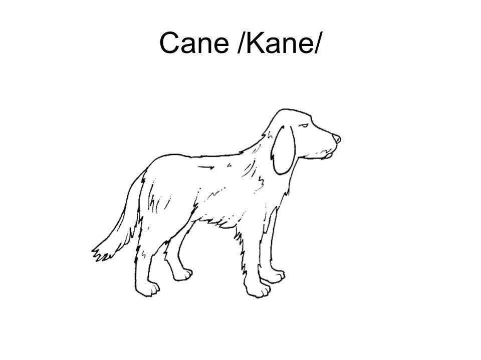 Cane /Kane/