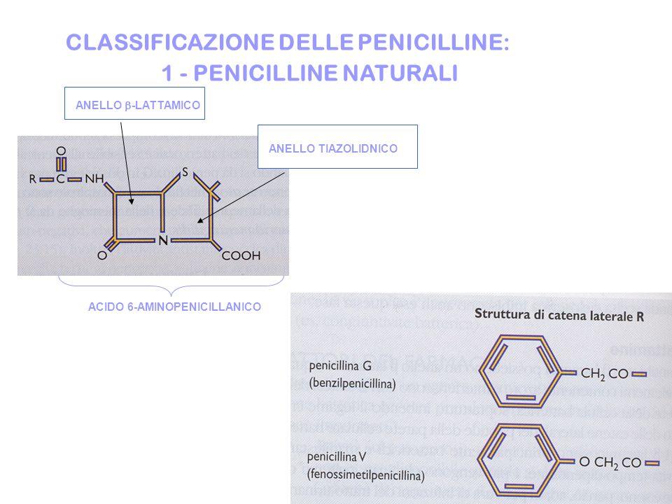 CLASSIFICAZIONE DELLE PENICILLINE: ANELLO -LATTAMICO ANELLO TIAZOLIDNICO ACIDO 6-AMINOPENICILLANICO 1 - PENICILLINE NATURALI