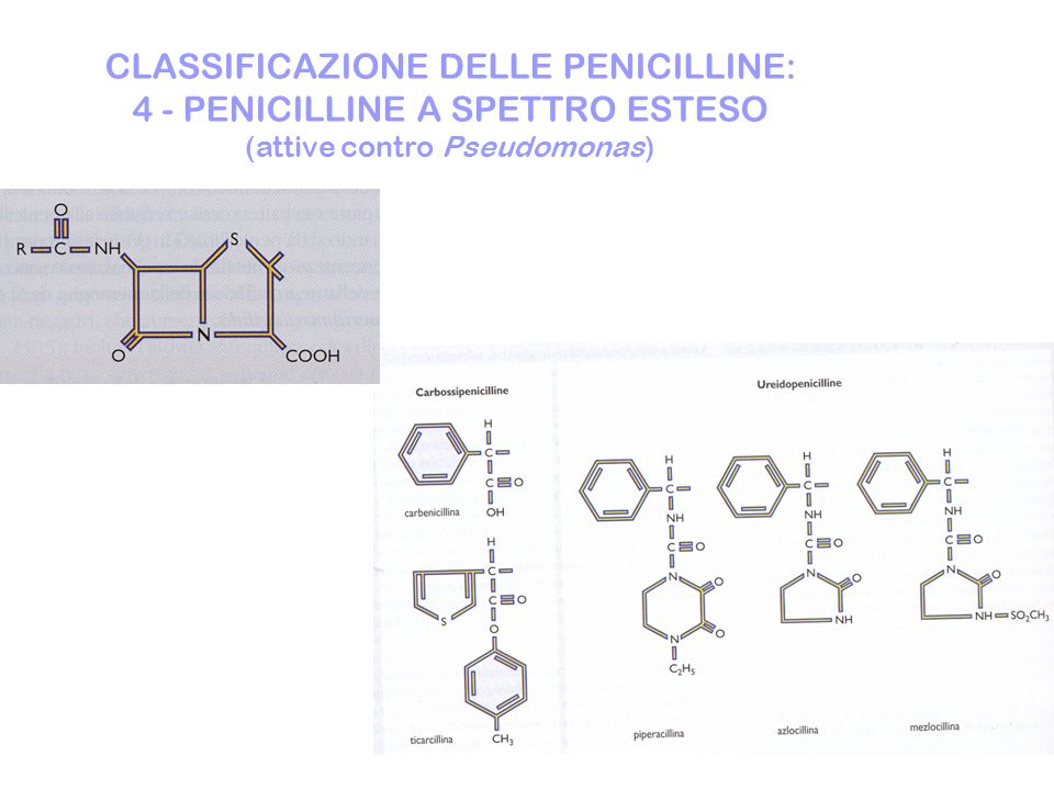 CLASSIFICAZIONE DELLE PENICILLINE: 4 - PENICILLINE A SPETTRO ESTESO (attive contro Pseudomonas)
