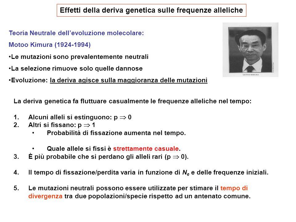 La deriva genetica fa fluttuare casualmente le frequenze alleliche nel tempo: 1.Alcuni alleli si estinguono: p 0 2.Altri si fissano: p 1 Probabilità d