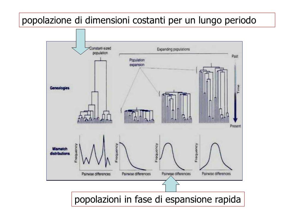 popolazioni in fase di espansione rapida popolazione di dimensioni costanti per un lungo periodo