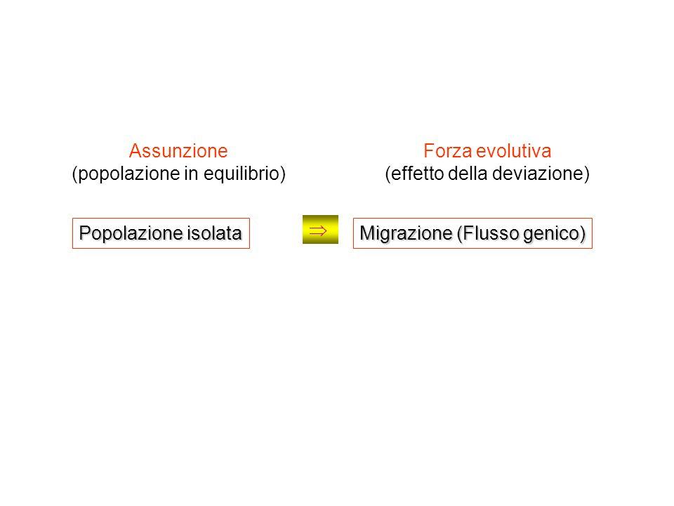Popolazione isolata Assunzione (popolazione in equilibrio) Forza evolutiva (effetto della deviazione) Migrazione (Flusso genico)