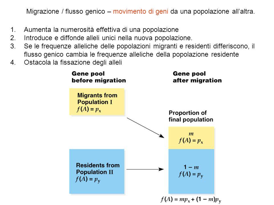1.Aumenta la numerosità effettiva di una popolazione 2.Introduce e diffonde alleli unici nella nuova popolazione. 3.Se le frequenze alleliche delle po