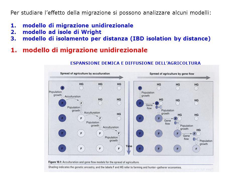 Per studiare leffetto della migrazione si possono analizzare alcuni modelli: 1.modello di migrazione unidirezionale 2.modello ad isole di Wright 3.mod