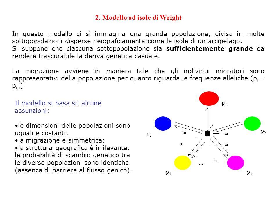 2. Modello ad isole di Wright In questo modello ci si immagina una grande popolazione, divisa in molte sottopopolazioni disperse geograficamente come