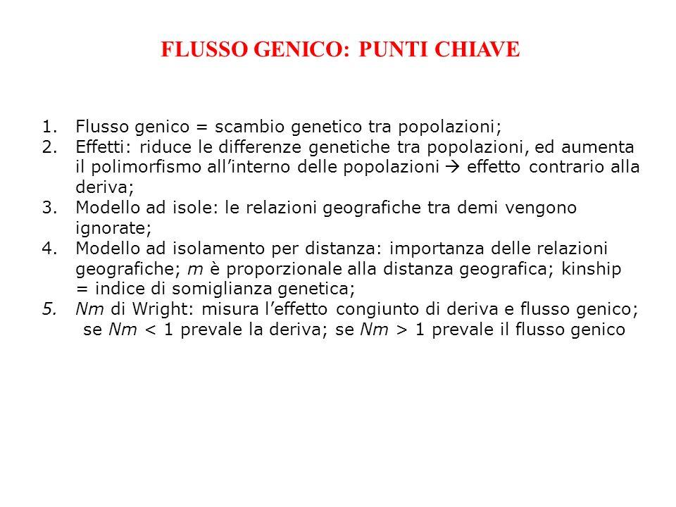 FLUSSO GENICO: PUNTI CHIAVE 1.Flusso genico = scambio genetico tra popolazioni; 2.Effetti: riduce le differenze genetiche tra popolazioni, ed aumenta