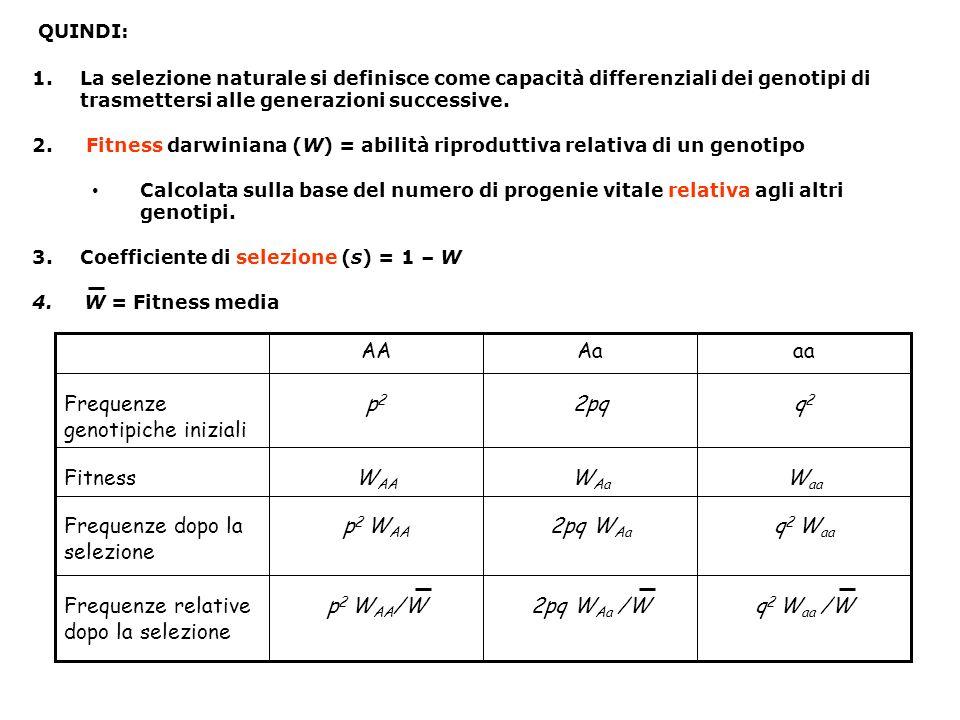 QUINDI: 1.La selezione naturale si definisce come capacità differenziali dei genotipi di trasmettersi alle generazioni successive. 2. Fitness darwinia