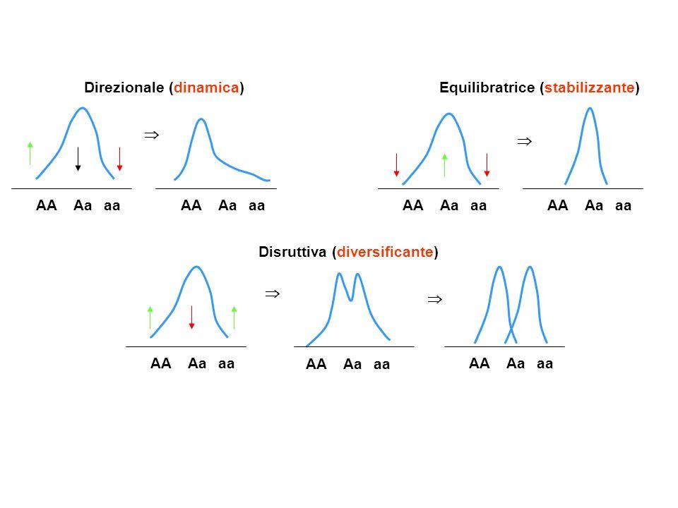 AA Aaaa Direzionale (dinamica) AA Aaaa Equilibratrice (stabilizzante) AA Aaaa Disruttiva (diversificante) AA Aaaa AA Aaaa AA Aaaa