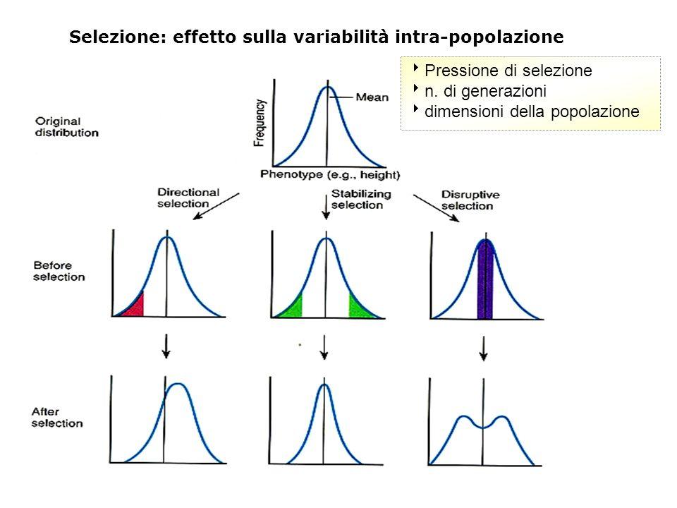 Selezione: effetto sulla variabilità intra-popolazione Pressione di selezione n. di generazioni dimensioni della popolazione