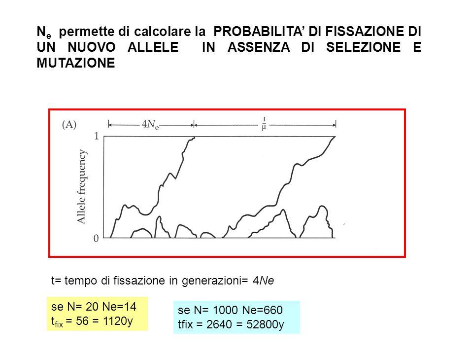 N e permette di calcolare la PROBABILITA DI FISSAZIONE DI UN NUOVO ALLELE IN ASSENZA DI SELEZIONE E MUTAZIONE t= tempo di fissazione in generazioni= 4