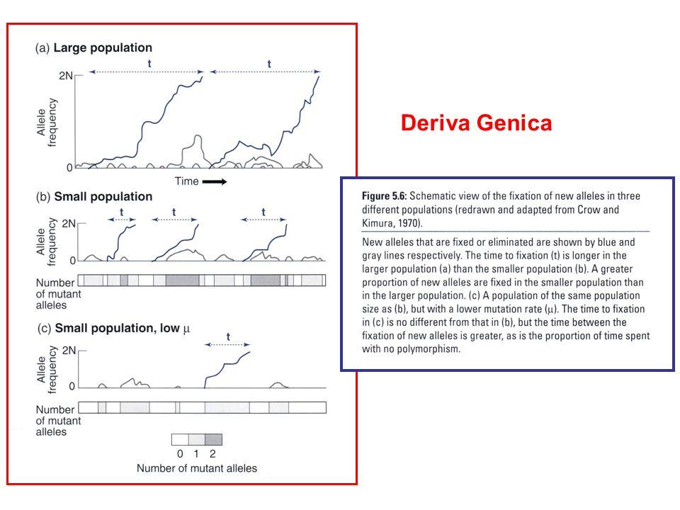 Deriva Genica