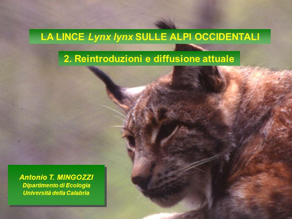 LA LINCE Lynx lynx SULLE ALPI OCCIDENTALI 2. Reintroduzioni e diffusione attuale Antonio T. MINGOZZI Dipartimento di Ecologia Università della Calabri