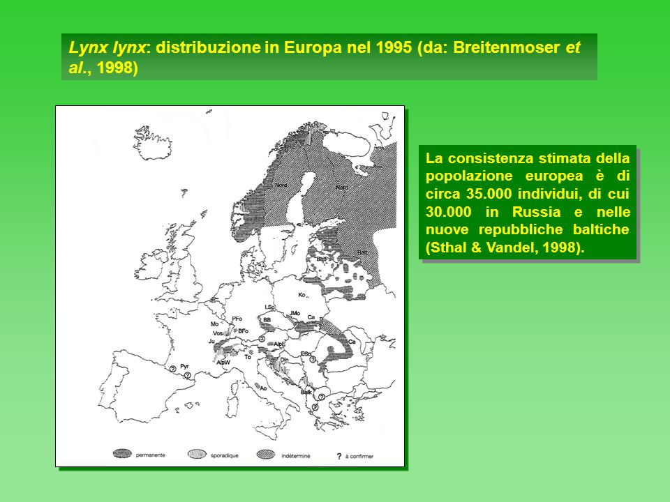 Lynx lynx: distribuzione in Europa nel 1995 (da: Breitenmoser et al., 1998) La consistenza stimata della popolazione europea è di circa 35.000 individ