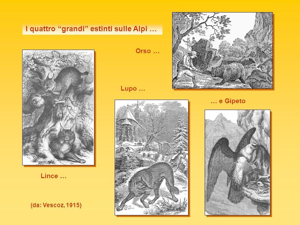 Distribuzione della Lince (Lynx lynx e Lynx pardinus) in Europa in epoca storica (a), nel 1800 (b) e verso il 1960 (c) (Kratochvil 1968 in Sthal & Vandel 1998) abc