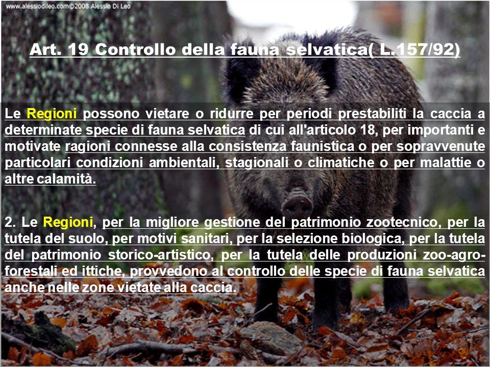 Art. 19 Controllo della fauna selvatica( L.157/92) Le Regioni possono vietare o ridurre per periodi prestabiliti la caccia a determinate specie di fau