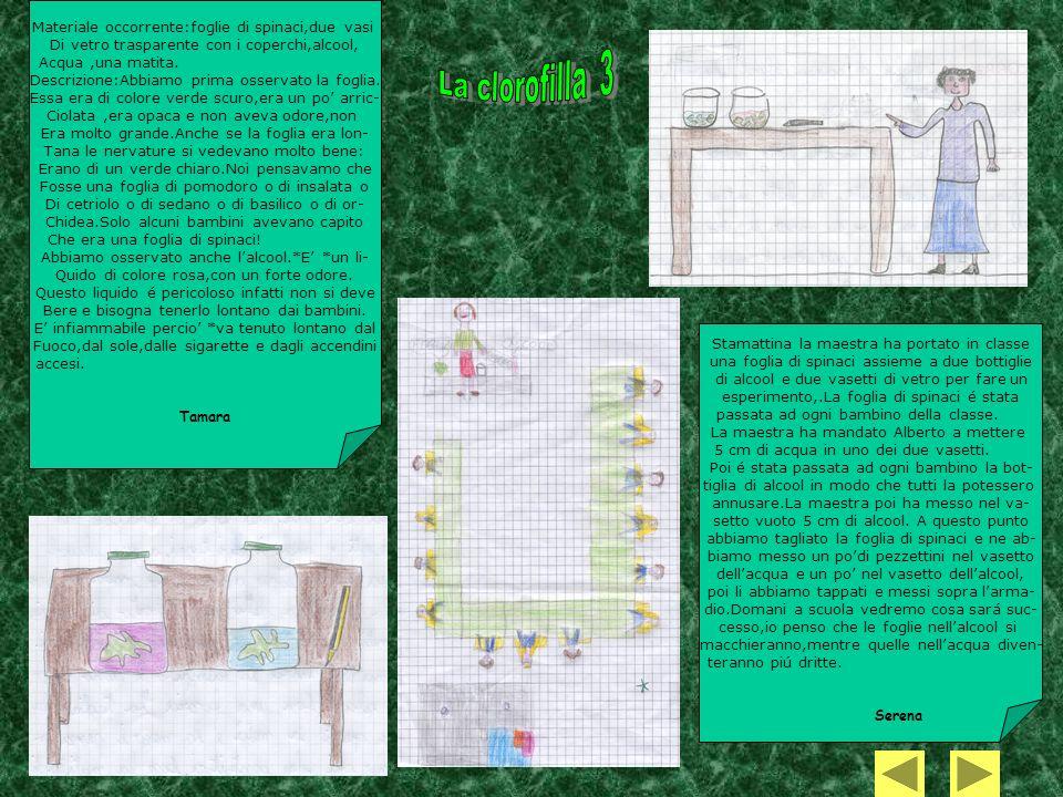 Materiale occorrente:foglie di spinaci,due vasi Di vetro trasparente con i coperchi,alcool, Acqua,una matita. Descrizione:Abbiamo prima osservato la f