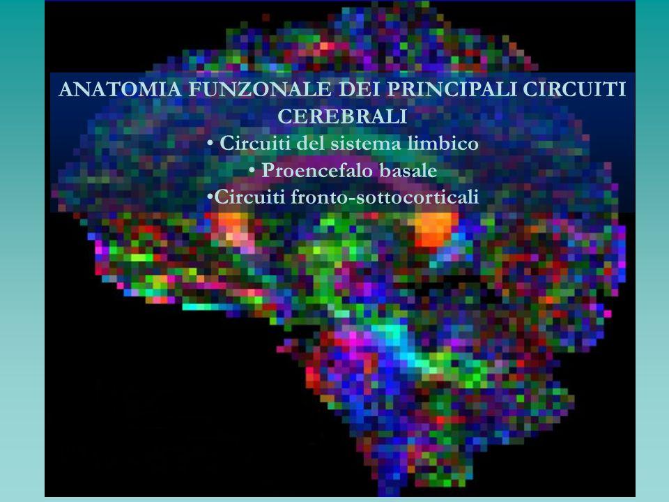 ANATOMIA FUNZONALE DEI PRINCIPALI CIRCUITI CEREBRALI Circuiti del sistema limbico Proencefalo basale Circuiti fronto-sottocorticali