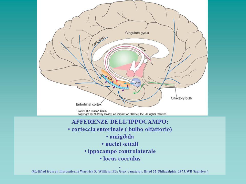 AFFERENZE DELLIPPOCAMPO: corteccia entorinale ( bulbo olfattorio) amigdala nuclei settali ippocampo controlaterale locus coerulus. (Modified from an i