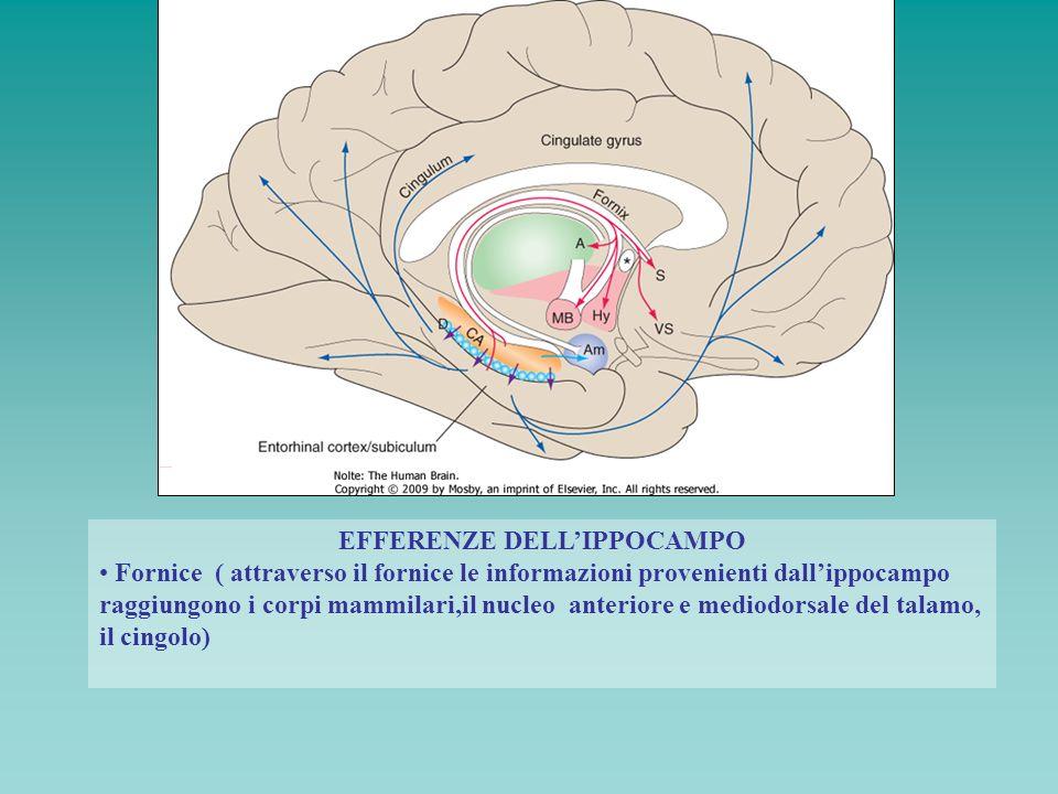 EFFERENZE DELLIPPOCAMPO Fornice ( attraverso il fornice le informazioni provenienti dallippocampo raggiungono i corpi mammilari,il nucleo anteriore e