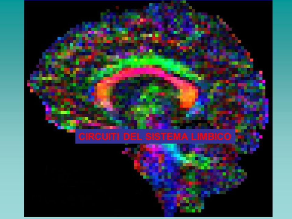 Circuito oculomotorio Area frontale oculomotoria ( area 8) Corteccia frontale dorsolaterale Corteccia parietale posteriore Putamen Pallido Sostanza nera Talamo Esplorazione spaziale Sindrome di Balint (paralisi psichica dello sguardo)