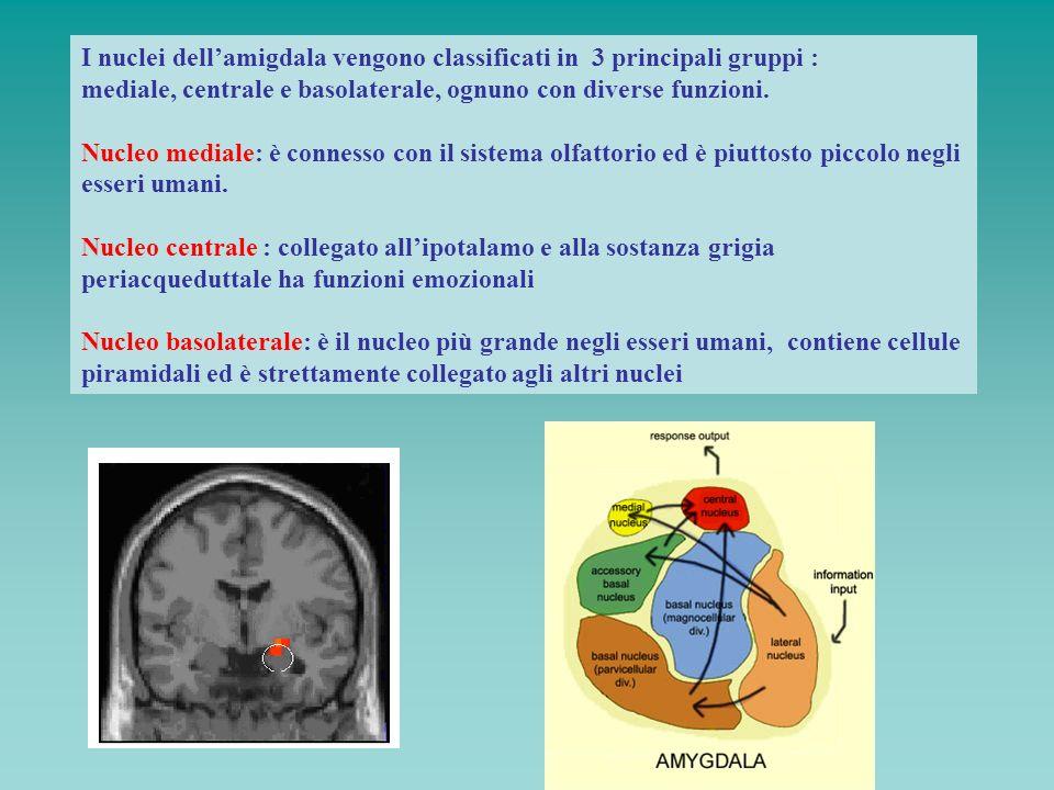 I nuclei dellamigdala vengono classificati in 3 principali gruppi : mediale, centrale e basolaterale, ognuno con diverse funzioni. Nucleo mediale: è c