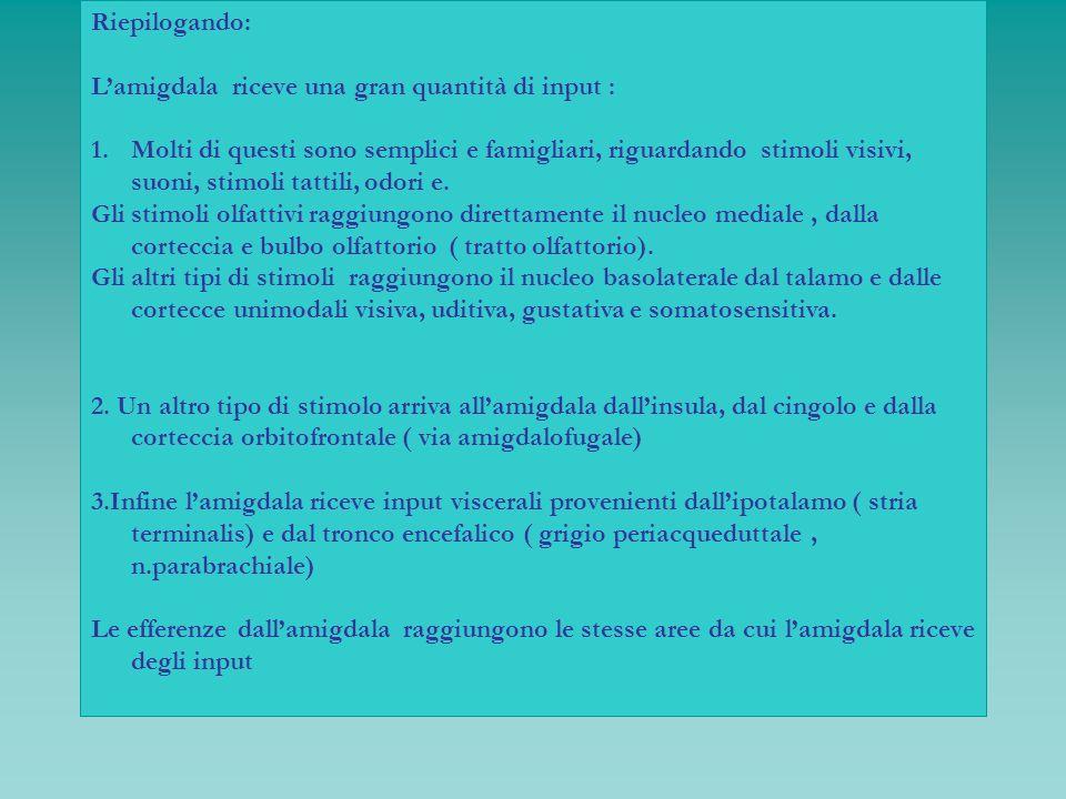 Riepilogando: Lamigdala riceve una gran quantità di input : 1.Molti di questi sono semplici e famigliari, riguardando stimoli visivi, suoni, stimoli t