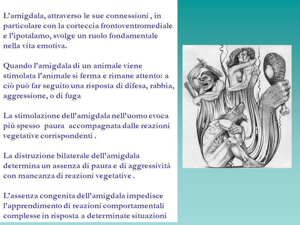 Lamigdala, attraverso le sue connessioni, in particolare con la corteccia frontoventromediale e lipotalamo, svolge un ruolo fondamentale nella vita em