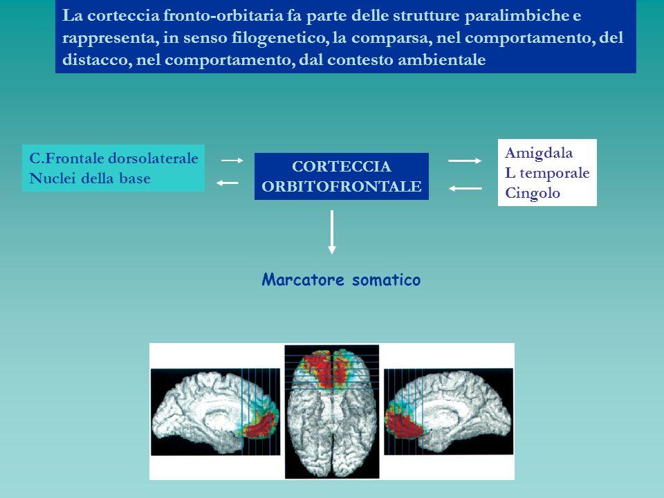 La corteccia fronto-orbitaria fa parte delle strutture paralimbiche e rappresenta, in senso filogenetico, la comparsa, nel comportamento, del distacco