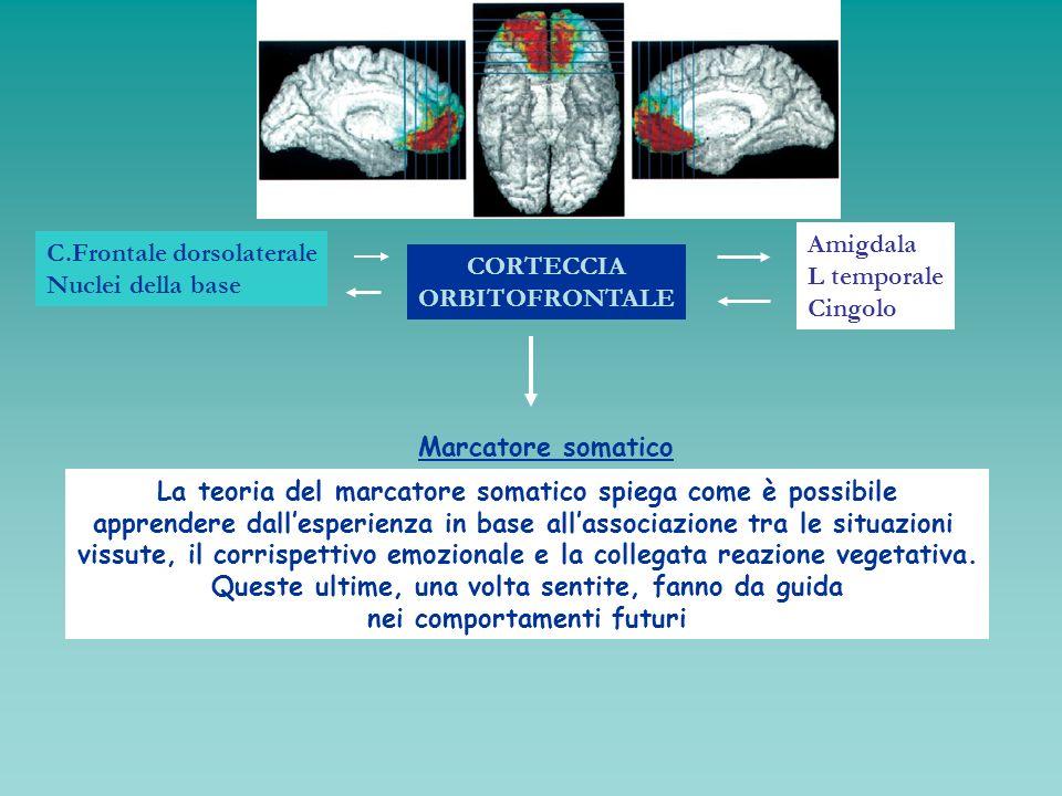 CORTECCIA ORBITOFRONTALE Amigdala L temporale Cingolo C.Frontale dorsolaterale Nuclei della base Marcatore somatico La teoria del marcatore somatico s