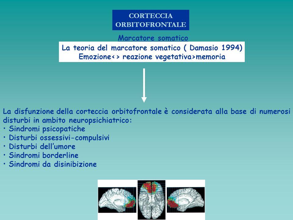 CORTECCIA ORBITOFRONTALE Marcatore somatico La teoria del marcatore somatico ( Damasio 1994) Emozione<> reazione vegetativa>memoria La disfunzione del