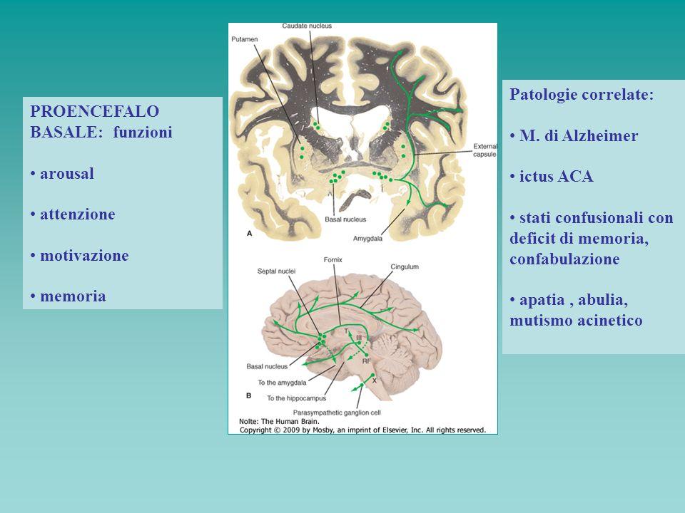 PROENCEFALO BASALE: funzioni arousal attenzione motivazione memoria Patologie correlate: M. di Alzheimer ictus ACA stati confusionali con deficit di m