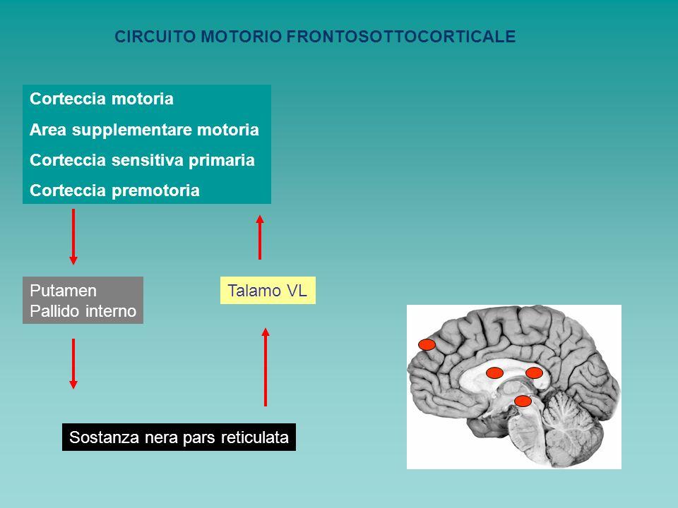 CIRCUITO MOTORIO FRONTOSOTTOCORTICALE Corteccia motoria Area supplementare motoria Corteccia sensitiva primaria Corteccia premotoria Putamen Pallido i