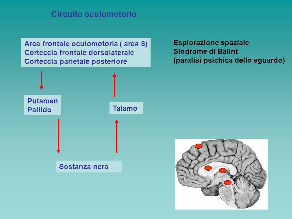 Circuito oculomotorio Area frontale oculomotoria ( area 8) Corteccia frontale dorsolaterale Corteccia parietale posteriore Putamen Pallido Sostanza ne