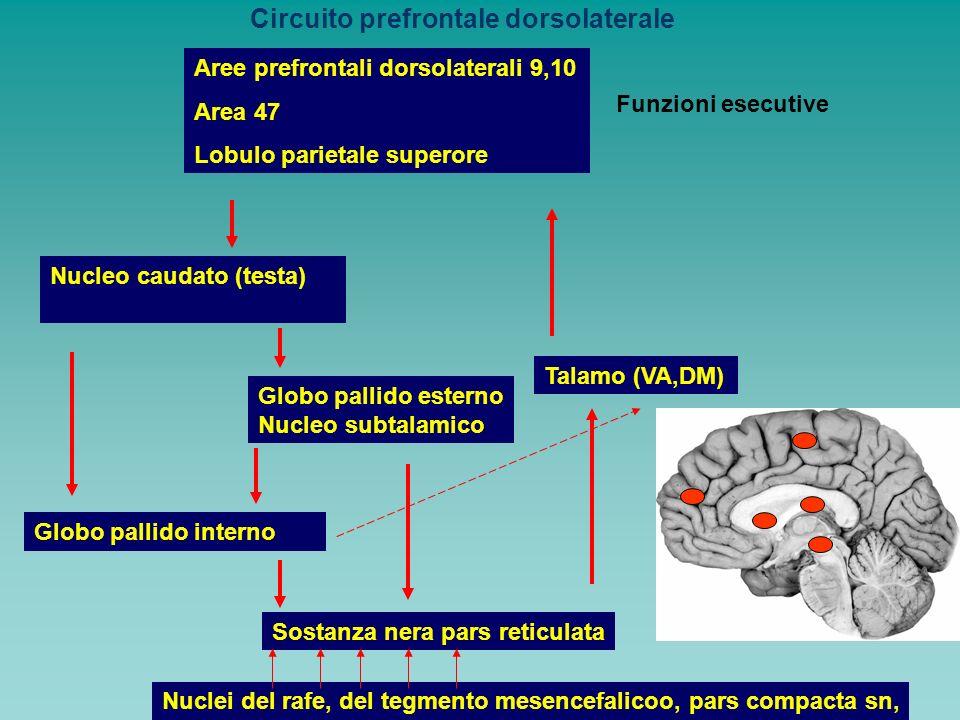 Circuito prefrontale dorsolaterale Aree prefrontali dorsolaterali 9,10 Area 47 Lobulo parietale superore Nucleo caudato (testa) Globo pallido interno