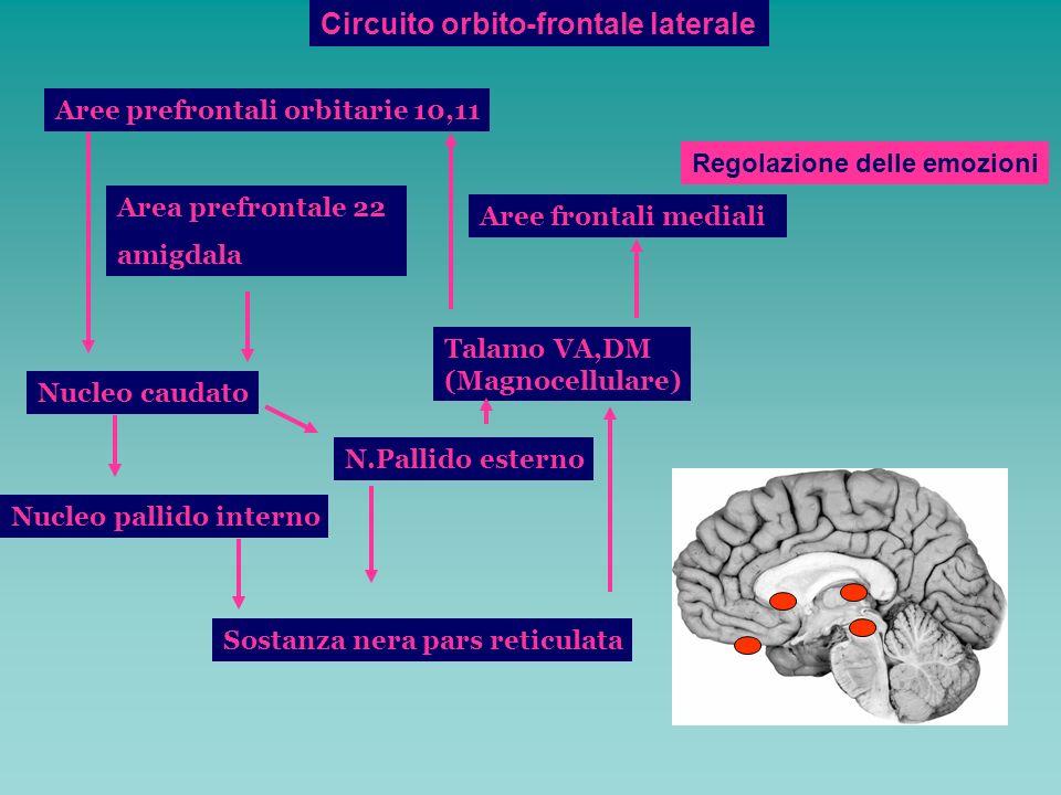 Circuito orbito-frontale laterale Aree prefrontali orbitarie 10,11 Nucleo caudato Nucleo pallido interno Sostanza nera pars reticulata N.Pallido ester