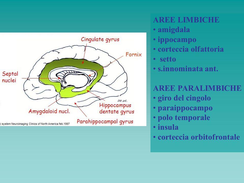 AREE LIMBICHE amigdala ippocampo corteccia olfattoria setto s.innominata ant. AREE PARALIMBICHE giro del cingolo paraippocampo polo temporale insula c