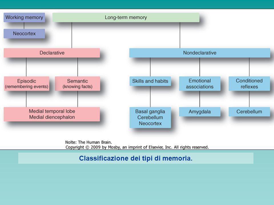 PROENCEFALO BASALE: funzioni arousal attenzione motivazione memoria Patologie correlate: M.