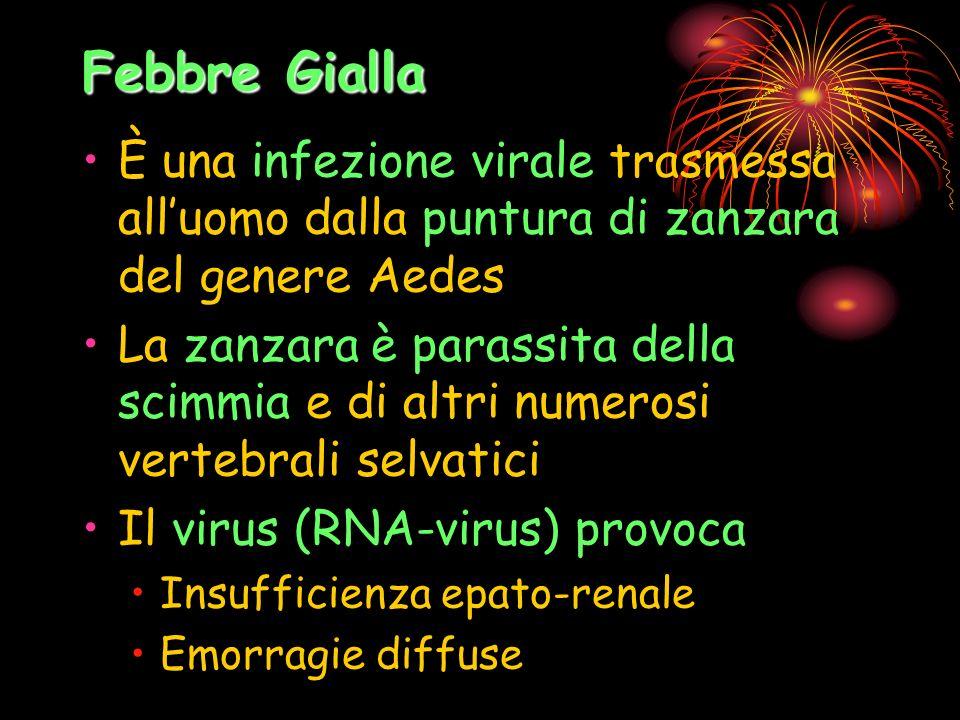 Febbre Gialla È una infezione virale trasmessa alluomo dalla puntura di zanzara del genere Aedes La zanzara è parassita della scimmia e di altri numer