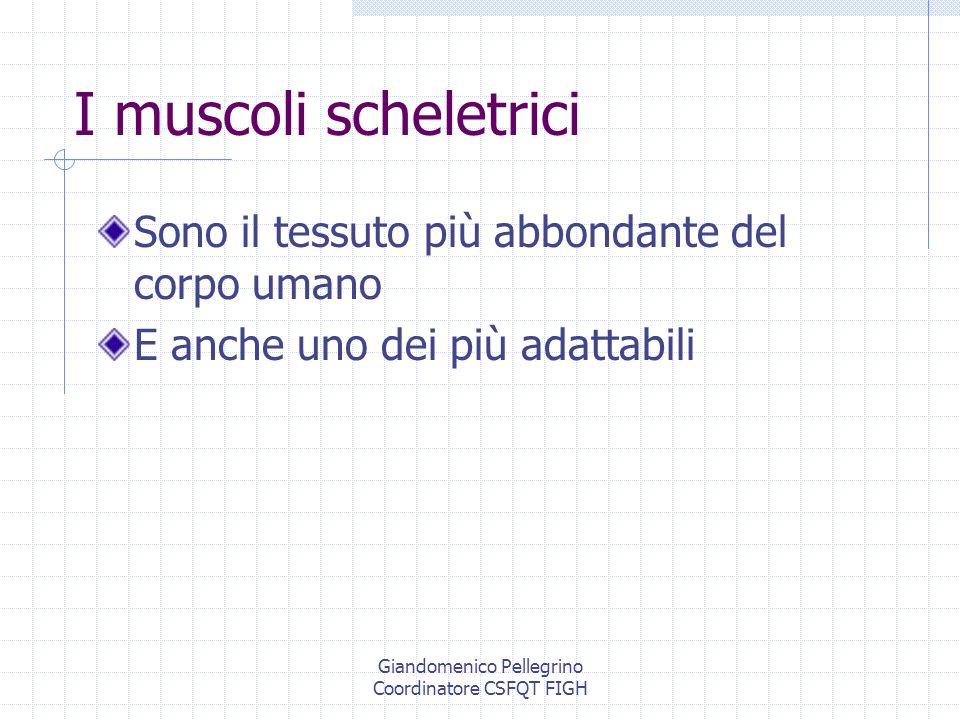 Giandomenico Pellegrino Coordinatore CSFQT FIGH Allenamenti intensivi Possono raddoppiare o triplicare la massa di un muscolo Possono modificare le fibre in modo da adattarle allesercizio