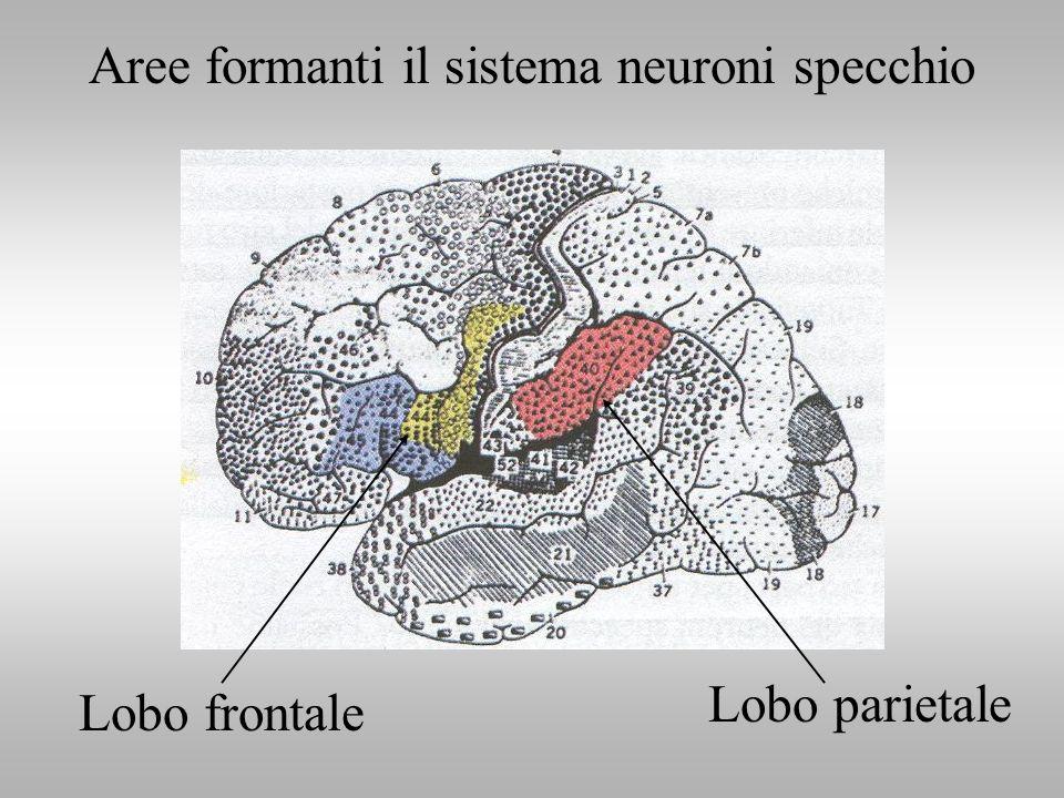 I NEURONI SPECCHIO NELLUOMO