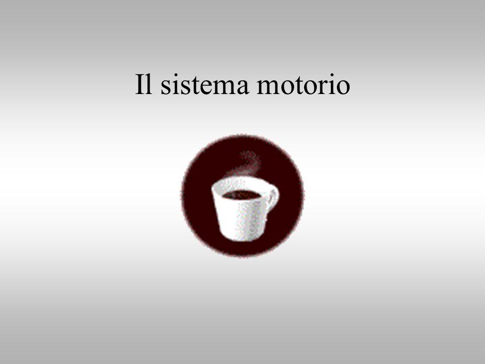 So quel che fai Il cervello che agisce e i neuroni specchio Giacomo Rizzolatti Corrado Sinigaglia 2006 Raffaello Cortina Editore